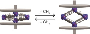 Space-filling models of cobalt-bdp MOF in the collapsed state (left) and CH4-expanded state (right). The purple, gray, blue, and white spheres represent Co, C, N, and H atoms, respectively.