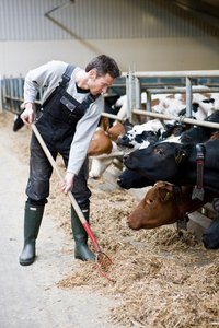 New study: Young farmers have a lung capacity that has developed less than you would expect.