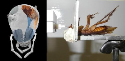 Left - micro-computed tomography image of a cockroach head showing the driving muscles of the left mandible; right - side view onto the experimental setup. Image credit: Tom Weihmann