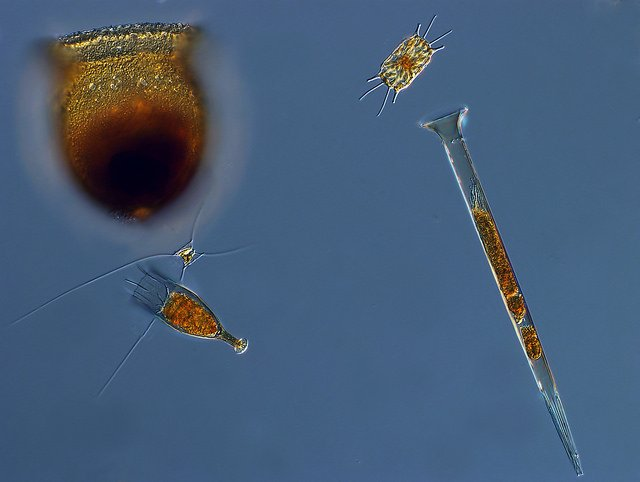 PNNL will develop new tools to study marine microorganisms such as these. Photo courtesy of NOAA Photo Library on Flickr, https://bit.ly/1N2tHfd.