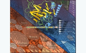 CSIRO's 3D visualisation tool, Aquaria, is helping to map the dark proteome using information from the Protein Data Bank.