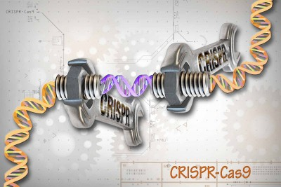 The conventional CRISPR-Cas9 system comprises two parts: the Cas9 enzyme, which acts like a wrench, and specific RNA guides (CRISPRs), which act as different socket heads. These RNAs guide the Cas9 protein to the target gene on a DNA strand. This technique allows researchers to study genes in a specific, targeted way. Credit: Ernesto del Aguila III, NHGRI