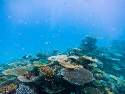 A healthy coral reef. Photo credit: Daniel H. Lin for UConn