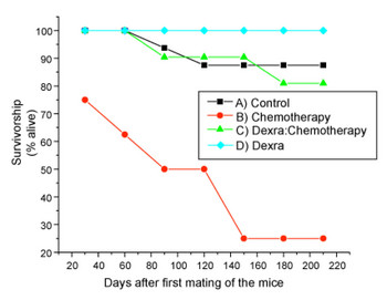 The red line indicates that most of the chemotherapy-only treated mice had extremely low survival rates; however, 90 percent of those treated with a low dose of dexra (green line) before chemotherapy lived much longer. Source: Sana Salih