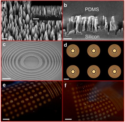 Tiny silicon nano-wire towers make up dark regions of the flexible Fresnel zone lenses. Each individual lens resembles a bull's-eye of alternating light and dark. Arrays of lenses formed within a flexible polymer bend and stretch into different configurations. Image credit: Hongrui Jiang