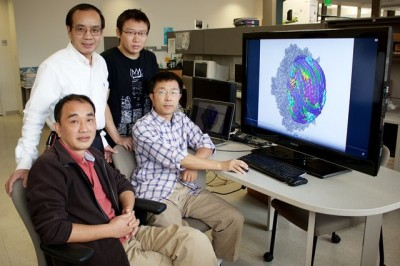 Researchers led by Hong Zhou (top left) found that the dsRNA virus uses proteins on its surface to sense its environment and that when conditions are optimal, those proteins turn the switch on inside the virus. Photo credit: Tunde Akinloye/CNSI