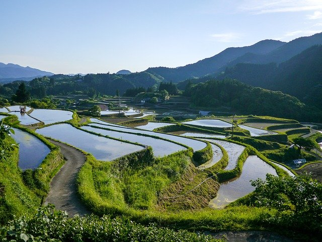 A new strain of rice that produces greater yields and almost no greenhouse gases has won the 2015 Popular Science award in the engineering category. Image credit: DeltaWorks via pixabay.com, CC0 Public Domain.