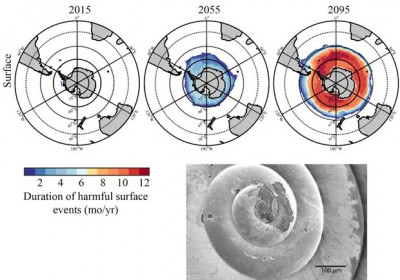 Duration of harmful surface events for today, 2055 and 2095. Inset: Example of pteropod showing in situ dissolution due to ocean acidification. Image credit: Nina Bednarsek, NOAA
