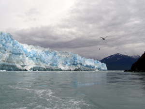 Terminus of the Hubbard Glacier at Resurrection Bay. The ice front is about 300 feet high. Image courtesy of the University of Cincinnati