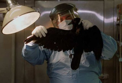 A New York State pathologist examines a dead crow the year West Nile first hit the East Coast.
