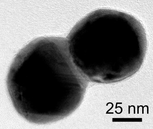 This electron microscope image shows a dimer of silver plated gold nanoparticles. A layer of silver connects the particles. Image credit: C. Byers/Rice University