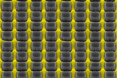 An array of nanopillars etched by thin layer of grate-patterned metal creates a nonreflective yet conductive surface that could improve electronic device performance. Image courtesy of Daniel Wasserman