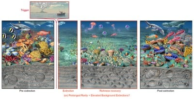 When fossils disappear, the world changes. Today's mass rarity of marine and terrestrial species may already have a mass extinction-like fossil record. Acting to save the fossil record of today by restoring species abundance and range could ensure the stability of the biosphere. Artwork courtesy of Nicolle R. Fuller/Sayo-Art