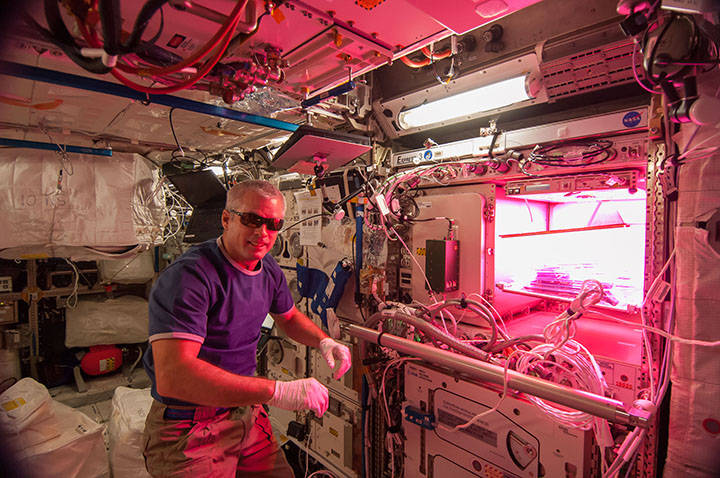 NASA astronaut Steve Swanson of Expedition 39 activated the red, blue and green LED lights of the Veggie plant growth system on May 7, 2014. Credits: NASA