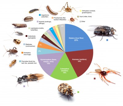 This graphic shows the proportional diversity of arthropod types across all of the rooms surveyed. Image credit: Bertone, et al.