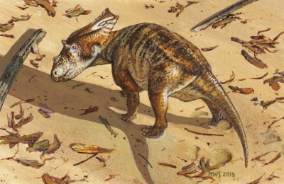 Life reconstruction of the baby chasmosaur, by artist Michael Skrepnick