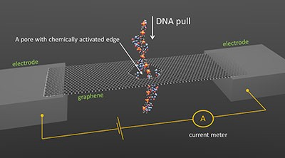 Caption: NIST concept for DNA sequencing through a graphene nanopore. Image credit: Smolyanitsky/NIST