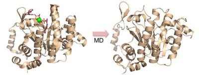 Vacquinol and its analogs as inhibitors for Rv3378c activity and bacterial cell growth. This image from Figure 5 in the published paper shows MD simulation/in silico screening approach used to identify Rv3378c inhibitors, with the X-ray structure (Left) and MD snapshot (Right). Image credit: J. Andrew McCammon, UC San Diego