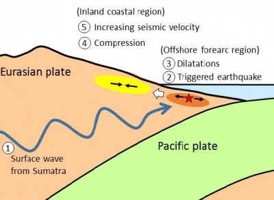An illustration of cascading changes including in seismicity in the crust Shallow normal faulting earthquakes are triggered by surface waves from the Sumatra earthquake, inducing crustal extension that results in compressional strain further inland, resulting in increased compressional strain and seismic velocity. Image credit: Kazushige Obara.