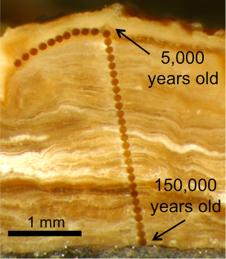 Magnified photograph of a cross-section through a 3 mm-thick pedothem soil deposit from Wyoming. The line of dots are laser ablation sampling spots that are 0.1 mm in diameter. The innermost mineral material is about 150,000 years old, and becomes progressively younger towards the outside. Image credit: Erik Oerter