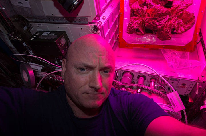 NASA astronaut Scott Kelly took this selfie with the second crop of red romaine lettuce in August of 2015. Credits: NASA