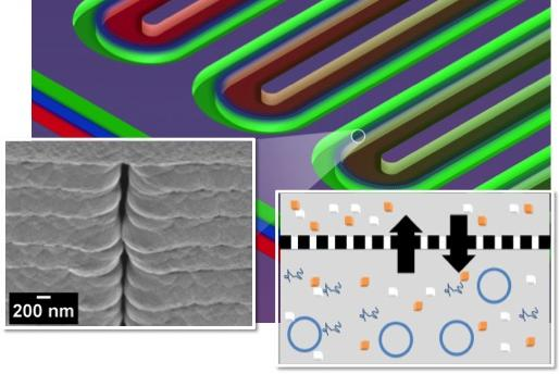 This section of a serpentine channel reactor shows the parallel reactor and feeder channels separated by a nanoporous membrane. At left is a single nanopore viewed from the side; at right is a diagram of metabolite exchange across the membrane.