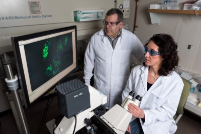 "Using strands of nucleic acid, scientists have demonstrated basic computing operations inside a living mammalian cell. Shown examining a cellular ""AND"" gate are associate professor Philip Santangelo and research scientist Chiara Zurla. Image credit: Rob Felt, Georgia Tech"