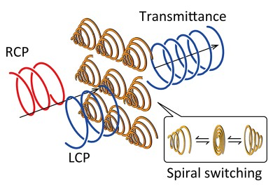 A schematic illustration of polarization modulation by the spiral metamaterial Passing light through a metamaterial composed of an array of reconfigurable metal spirals changes its polarization state. By changing the direction of the conic helices, the circular polarization of the light transmitted through the material can be switched from left to right and vice versa. Image credit: Tetsuo Kan.