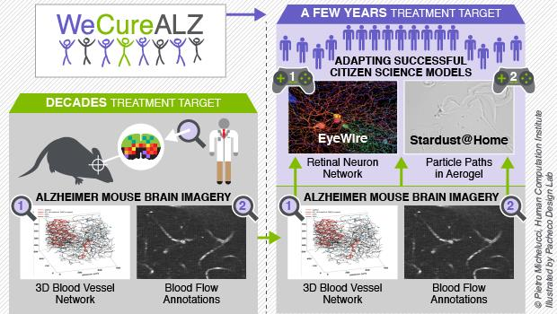 For one group of researchers to analyze thousands of Alzheimer's brain vessels would literally take decades. However, using the models of existing citizen science projects, the crowd successfully achieve the same in just a few years.