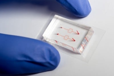 Researchers at Georgia Tech and Emory University fabricated model blood vessel systems that include artificial blood vessels with diameters as narrow as the smallest capillaries in the body. The systems were used to study the activity of white blood cells as they were affected by drugs that tend to make them softer, which facilitates their entry into blood circulation. Image credit: Rob Felt, Georgia Tech