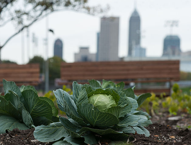 Urban gardens are popular around the world and these, who are run by communities, offer not only fresh vegetables, but social networks as well. Image credit: Howellboy via Wikimedia, CC-BY-SA-4.0