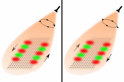 Researchers used the spin of light to guide the flow of optical information. Shining right-circularly polarized light on nanoribbons made of special 2-D materials enables light to flow forward on one edge and backward on the other edge. Changing the polarization of the light causes the guided modes to reverse directions. Image credit: Anshuman Kumar Srivastava