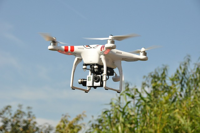 Animal population counts obtained from drones are an order of magnitude more precise than counts performed by humans on the ground – a new finding expected to revolutionise ecological monitoring. Image credit: mail111 via pixabay.com, CC0 Public Domain.