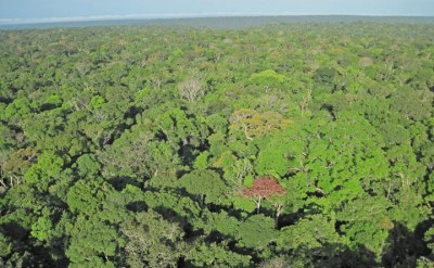 Pictures like this one, taken from special cameras installed on towers above the rainforest canopy, recorded the changes in hundreds of individual tree crowns over the seasons in three different forests across the central Amazon.
