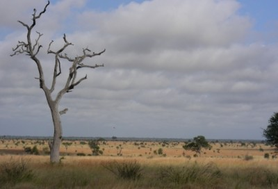 Savanna grassland PreviousPauseNext 2 of 4 Nutrient pollution is shifting the way symbiotic organisms interact in all kinds of ecosystems, including these South African savanna grasslands. Image credit: Deron Burkepile