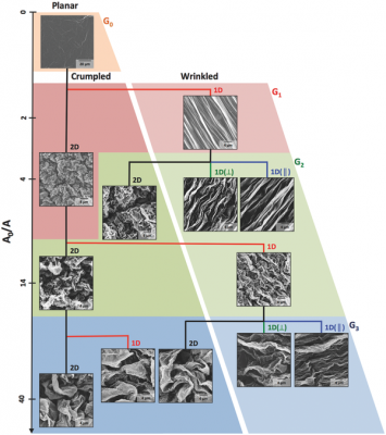 Different modes of shrinking in different orders creates different types of structures. Image credit: Hurt and Wong Labs / Brown University