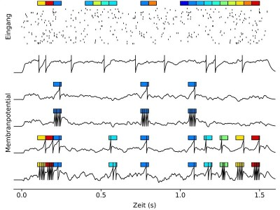 Robert Gütig has programmed neuronal networks and lined them with different sensory stimuli (coloured boxes) that are reflected in the input activity (Point Pitch). The black curves represent the membrane potential profiles of model neurons before (top curve) and after (second to fifth curves) different learning scenarios. Depending on whether and how much help the individual sensory stimuli contribute to a learning signal, the cell can filter out the associated activity pattern from the input type and encode the stimuli with a certain number of action potentials. Image credit: MPI f. Experimental Medicine/ R. Gütig
