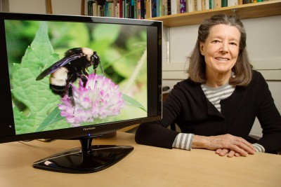 U. of I. entomology professor Sydney Cameron led a genetic study of Nosema bombi, a fungus that is afflicting bumble bees in North America and Europe. Photo by L. Brian Stauffer