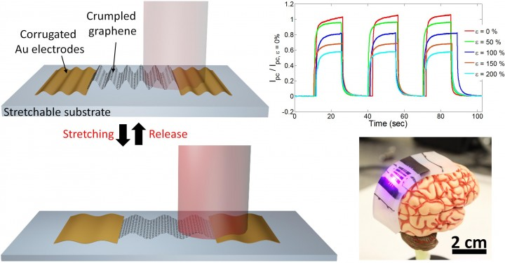 Stretchable photodetector with enhanced, strain-tunable photoresponsivity was created by engineering the 2D graphene material into 3D structures, increasing the graphene's areal density.