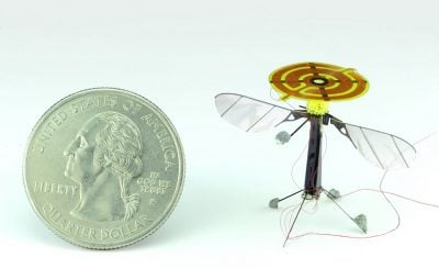 A new study co-authored by a UW mechanical engineer demonstrates how flying insect-sized robots can land and stick to surfaces, which conserves energy and extends flight times.Reprinted with permission from Graule et al., SCIENCE 352:978(20 May 2016)