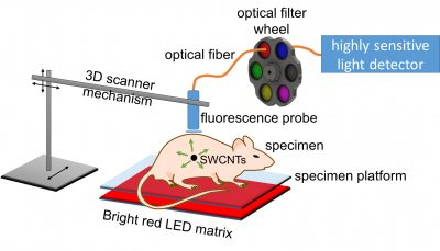A new Rice University method for medical imaging uses strong light from an LED array and an avalanche photodiode detector to pinpoint the location of tumors that have been tagged by antibody-targeted carbon nanotubes. The method can detect fluorescence from single-walled carbon nanotubes (SWCNTs) through up to 20 millimeters of tissue. Image credit: Weisman Lab/Rice University