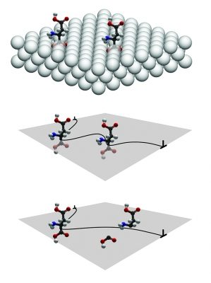 Top: Aspartic acid molecules embedded in a crystalline lattice. Middle: A dislocation in the crystal, represented by the black line, gets hung up on the molecules. Bottom: The dislocation cuts one of the molecules. The strength of a covalent bond in the molecule ultimately determines the hardness of the crystal. Credit: Nicole Wiles