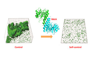 """Bioengineered """"beneficial biofilms"""" may prevent the biofouling of reverse osmosis (RO) membranes. Image: Thomas Wood"""