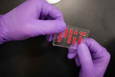 Engineers at MIT have devised a method to bind two stretchy materials: gelatin-like polymer materials called hydrogels, and elastomers, which are impervious to water and can thus seal in the hydrogel's water. Photo credit: Melanie Gonick/MIT