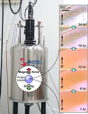 High-throughput and high-quality protein crystal formation system A superconducting magnet system with an in-place and real-time observation device for high-throughput formation of high-quality protein crystals under quasi-microgravity environment created on Earth (left). Time lapse images of crystal growth of a fluorescent protein (right; 1 to 24 hours after the crystallization setup). The magnetic field is directed upwards. Image credit: Masaru Tanokura.