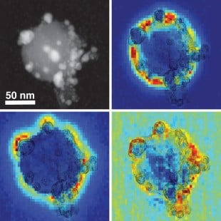 A composite image shows a scanning transmission electron microscope view of an antenna-reactor catalyst particle (top left) along with electron energy loss spectroscopy maps that depict the spatial distribution of individual plasmon modes around the palladium islands. These plasmon modes are responsible for capturing light energy and transferring it to the catalyst particles. Image courtesy of D. Swearer/Rice University