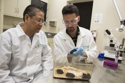 Zhou-Feng Chen, PhD (left), director of the Center for the Study of Itch at Washington University School of Medicine in St. Louis, and postdoctoral research scholar Devin M. Barry, PhD, have found that certain pathways in the sensory neurons of mice can work together to transmit itch signals. The discovery may help scientists find more effective ways to make itching stop. Image credit: Robert J. Boston/School of Medicine