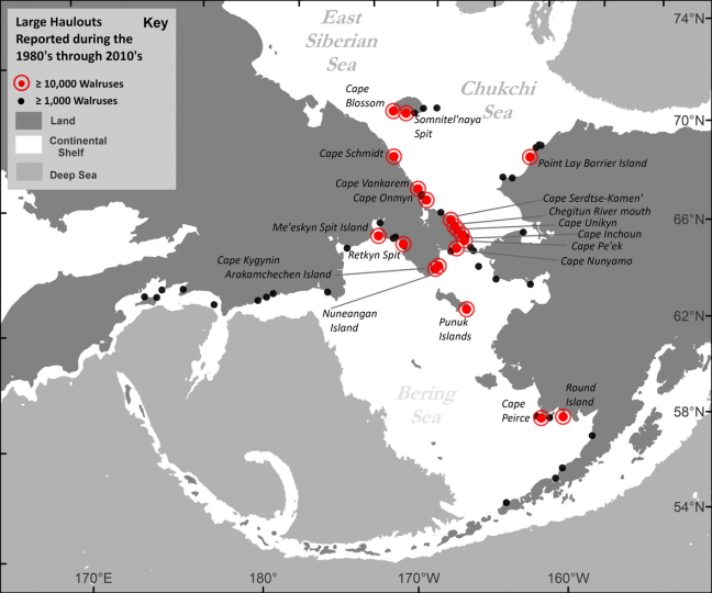 Map showing Pacific walrus coastal haulout locations reported in the past four decades (1980s– 2010s), with a maximum aggregation size of greater than or equal to 1,000 walruses.