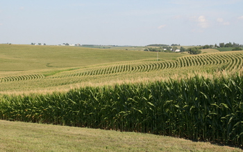 Corn fields in Iowa: Site of NSF's Intensively Managed Landscapes Critical Zone Observatory (CZO). Image credit: Praveen Kumar