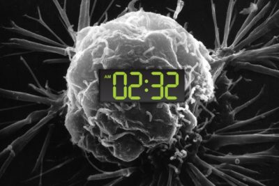 In humans and most other organisms, a circadian clock governed by light regulates the timing of key aspects of human physiology, by controlling cellular activities such as metabolism and division. Image credit: National Cancer Institute, Christine Daniloff/MIT